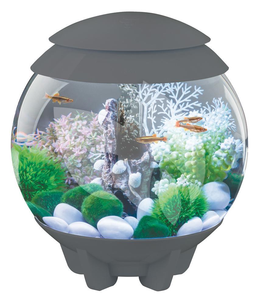 biorb halo aquarium 60 liter led maanlicht grijs. Black Bedroom Furniture Sets. Home Design Ideas