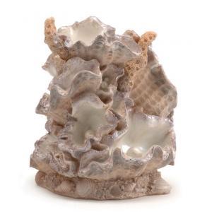 BiOrb ornament mossel klein aquarium decoratie