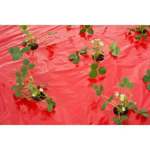 Kweekfolie voor aardbeien 0.95 x 10 m