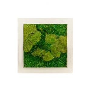 Moswand schilderij polystone vierkant naturel 50A