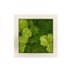 Moswand schilderij polystone vierkant naturel 50B