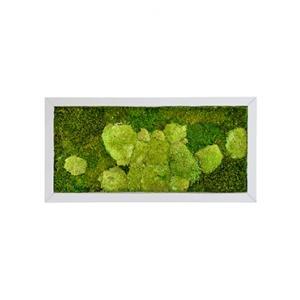 Moswand schilderij metaal superline rechthoek 100A