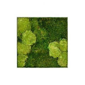 Moswand schilderij metaal superline L vierkant 50B