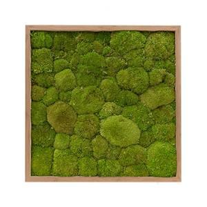 Moswand schilderij bamboe vierkant 60 bolmos