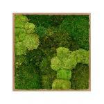 Moswand schilderij bamboe vierkant 80 mix