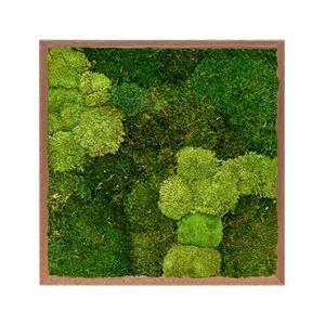 Moswand schilderij meranti hout vierkant 60 mix
