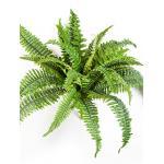 Kunstplant Nephrolepis M