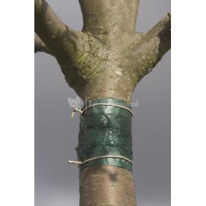 Insecten kleefband