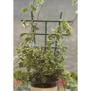 Plantenrekjes