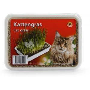 Kattengras in plastic box