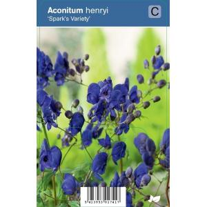 Monnikskap (aconitum henryi Spark's Variety) schaduwplant - 12 stuks