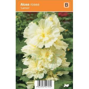 Stokroos (alcea rosea Lemon) zomerbloeier - 12 stuks