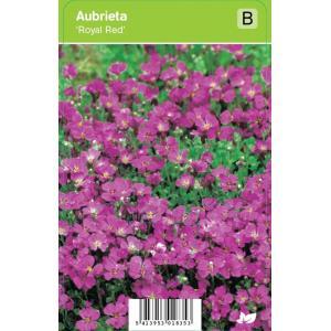 Randjesbloem (aubrieta Royal Red) voorjaarsbloeier - 12 stuks
