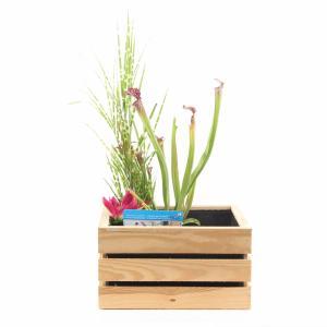 Mini vijver in houten kistje blank - 2 stuks
