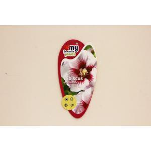Hibiscus syriacus Monstrosus - 40 cm - 3 stuks