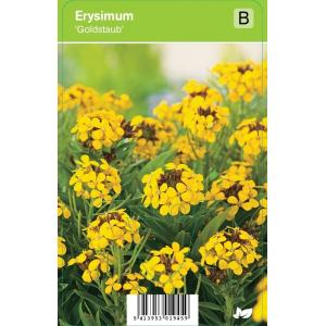 Muurbloem (erysimum Goldstaub) voorjaarsbloeier - 12 stuks