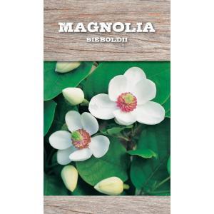 Magnolia struik Sieboldii - 80 - 100 cm - 4 stuks