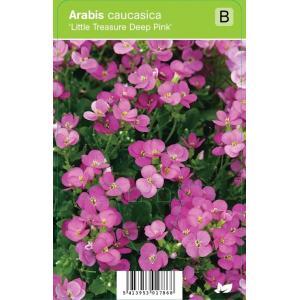 Rijstebrij (arabis little treasure Deep Pink) voorjaarsbloeier - 12 stuks