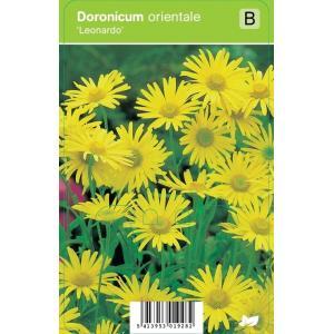 Voorjaarszonnebloem (doronicum orientale Leonardo) voorjaarsbloeier - 12 stuks