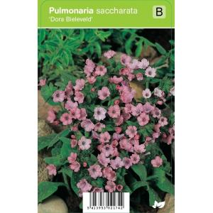 Longkruid (pulmonaria saccharata Dora Bielefeld) voorjaarsbloeier - 12 stuks