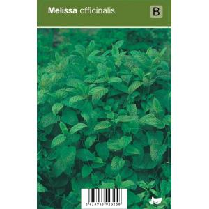 Citroenmelisse (melissa officinalis) kruiden - 12 stuks