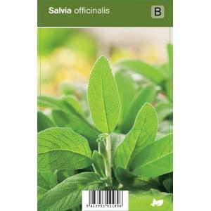 Salie (salvia officinalis) kruiden - 12 stuks