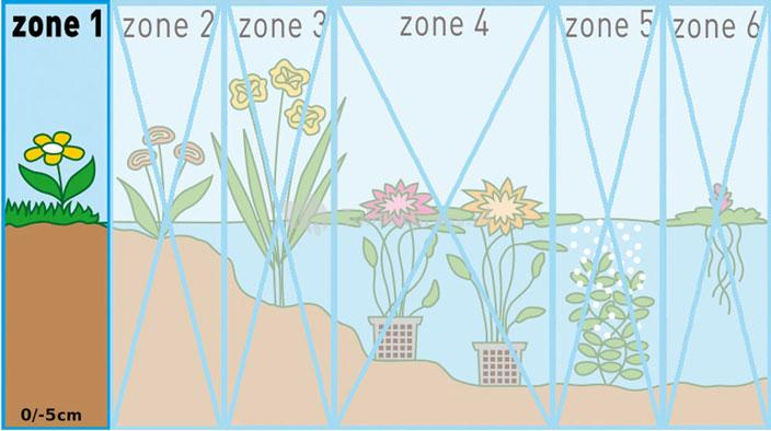 Adderwortel (Polygonum bistorta) moerasplant