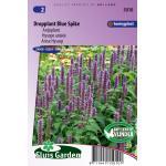 Anijsplant bloemzaden - Dropplant Blue Spike