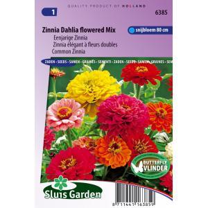 Eenjarige Zinnia bloemzaden – Zinnia Dahlia flowered mix