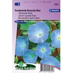 Klimmende Winde bloemzaden - Pronkwinde Heavenly Blue