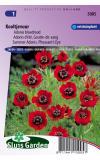 Adonis bloedrood bloemzaden - Kooltjevuur