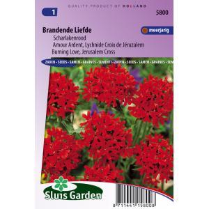Scharlakenrood bloemzaden – Brandende liefde