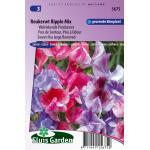 Welriekende pronkerwt bloemzaden – Reukerwt Ripple Mix