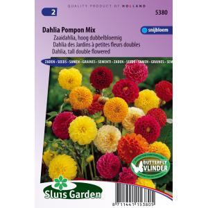 Zaaidahlia hoog dubbelbloemig bloemzaden - Dahlia Pompon Mix