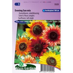 Zonnebloem enkelbloemig bloemzaden - Evening sun Mix