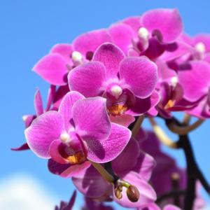 De prachtige orchidee