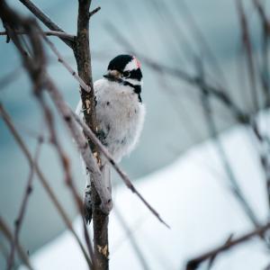 Vogels voeren in de winter