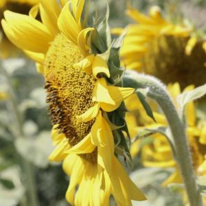 Tuintips Augustus - beplanting