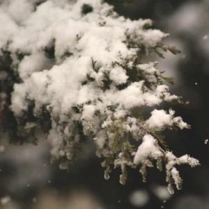 Tuintips December - beplanting