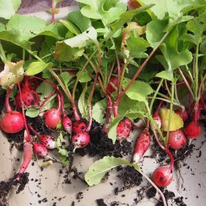 Tuintips Maart - de eetbare tuin