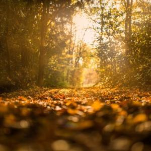 Tuintips November - algemeen