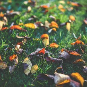 Tuintips November - het gazon