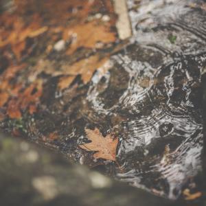 Tuintips November - vijver