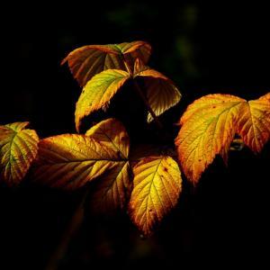 Tuintips Oktober - beplanting
