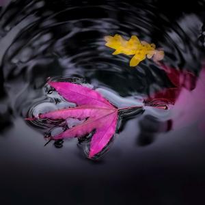 Tuintips Oktober - vijver
