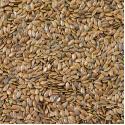 Tips voor het bewaren van zaden