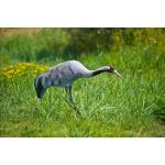 Kraanvogel dierfiguur